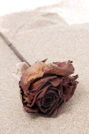 a red dry rose on the sand photo