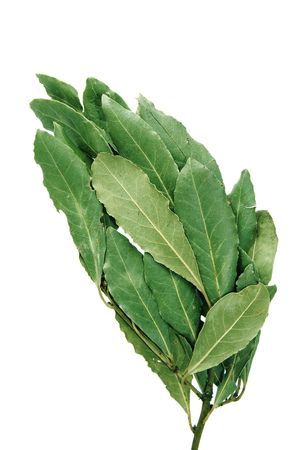 a bunch of laurel isolated on a white background photo