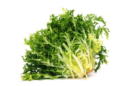 endive: an escarole endive isolated on a white background