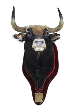 stuffed animals: detail of a stuffed head of a bull isolated on a white background