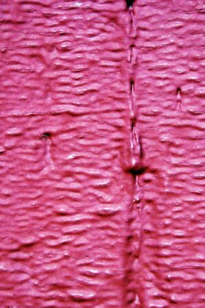 background made of a close-up of a pink wall Stock Photo - 6597214