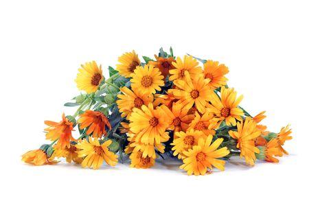 fiori di campo: un mazzo di fiori selvatici isolato su uno sfondo bianco Archivio Fotografico