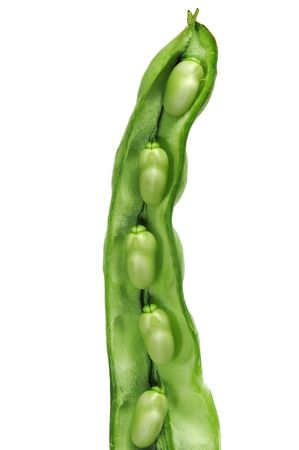 haba: close up of a broad bean pod with the beans inside