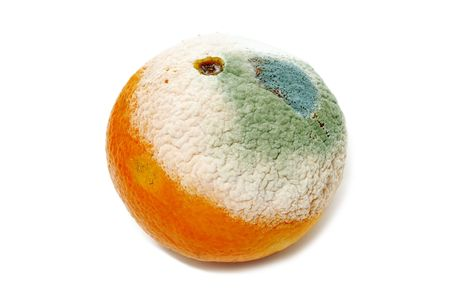 decomposition: a moldy orange isolated on a white background