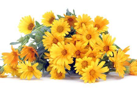 fleurs des champs: fermeture de quelques wildflowers pourpres