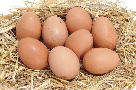 eier: eine Nahaufnahme eines Haufens von braune Eier in ein Stroh nest