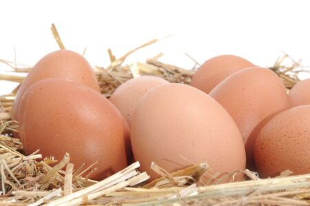 poultry yard: closeup of a pile of brown eggs in a straw nest