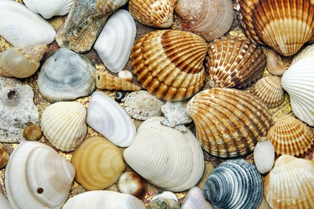 sea shells: background made of a closeup of a pile of seashells on the sand