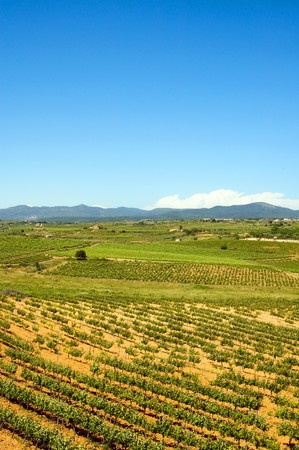 a vineyards landscape in Tarragona, Spain Stock Photo - 6898347