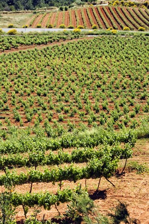 a vineyards landscape in Tarragona, Spain Stock Photo - 6898351