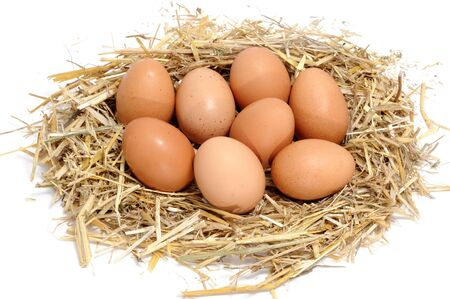 a pile of brown eggs in a nest isolated on a white background photo