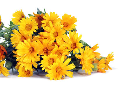 a yellow wild daisies bouquet on a white background photo