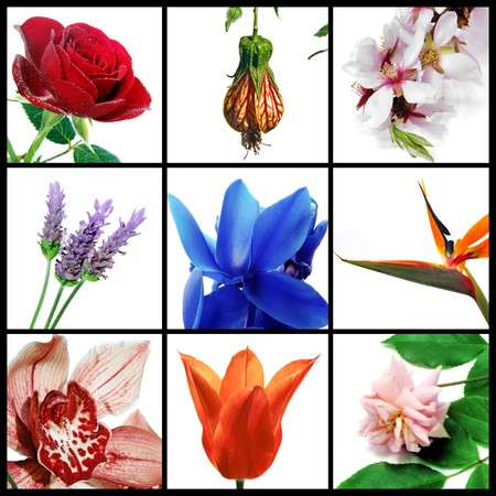 a collage of nine pictures of different flowers photo