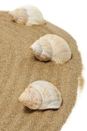 a pile of spired seashells on the sand photo