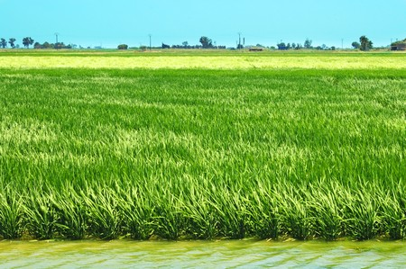 view of a paddy field in Delta de l'Ebre, Catalonia, Spain Stock Photo - 7036183