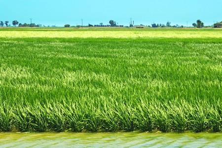 view of a paddy field in Delta de l'Ebre, Catalonia, Spain Stock Photo - 7036183