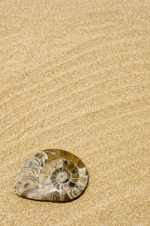 mollusc: a fossil of a seashell on the sand of a beach Stock Photo