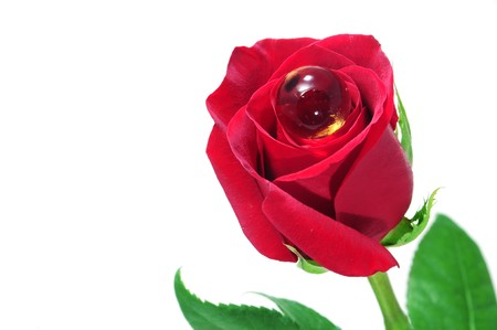 a red rose with a gel pearl isolated on a white background photo