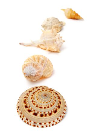 a pile of different seashells isolated on a white background photo