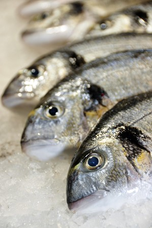 hake: a lot of sea breams ready to sale