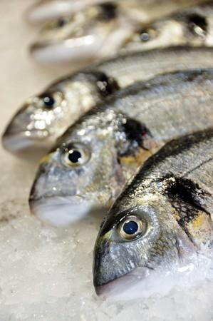 daurade: beaucoup de mer Br�me (castagnole) pr�ts � la vente  Banque d'images