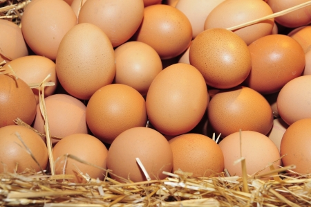 a pile of brown eggs in a nest isolated on a white background
