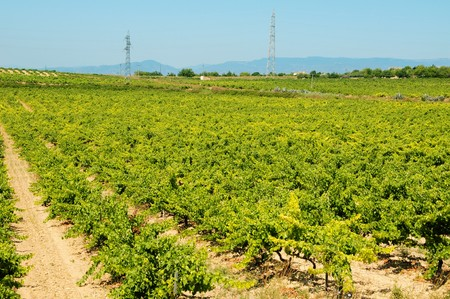 view of a landscape of vineyards in Spain Stock Photo - 7643643