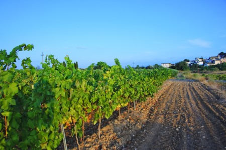 view of a landscape of vineyards in Spain Stock Photo - 7643621
