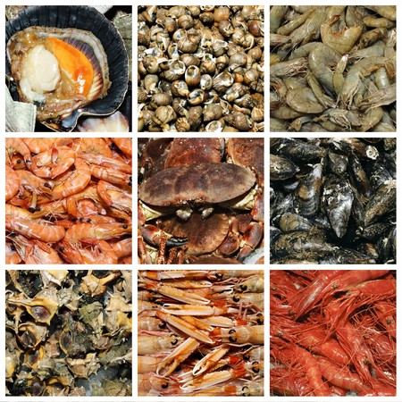 a collage of nine pictures of different seafood photo