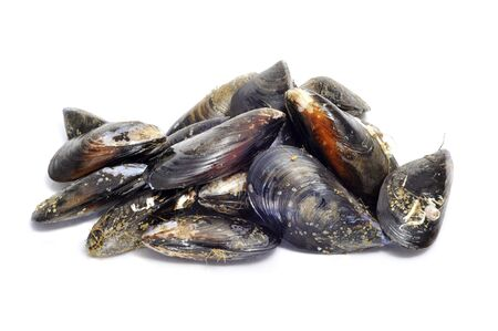 a lot of mussels isolated on a white background photo