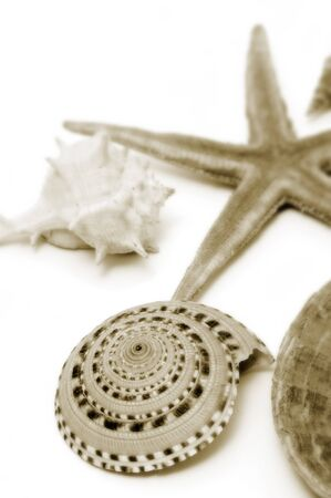 sea star: a starfish and some seashells isolated on a white background