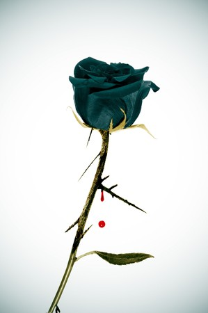 beautiful vampire: a black rose on an emo background with blood Stock Photo