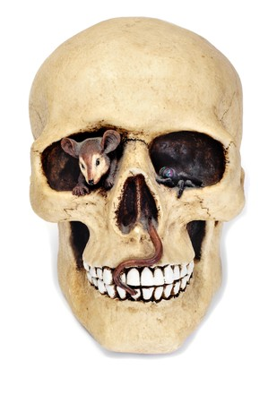 a skull for Halloween isolated on a black background photo