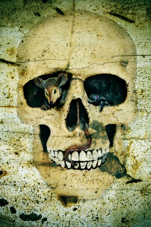 a skull for Halloween on a scary background photo