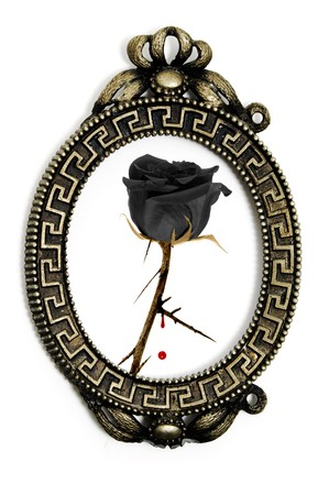 rosa nera: a black rose in a vintage frame on a white background Archivio Fotografico