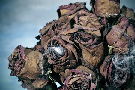 closeup of a dried roses bouquet with spiderweb for Halloween photo