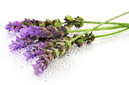 lavender flowers isolated on a white background Stock Photo - 8020596