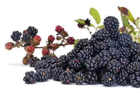 caneberries: a pile of blackberries isolated on a white background Stock Photo
