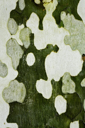 background made of a close-up of a peeled wall Stock Photo - 8220016