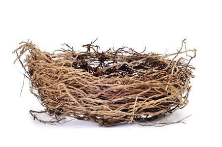 bird life: a nest isolated on a white background