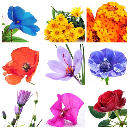 a collage of nine pictures of different flowers Stock Photo - 8327197