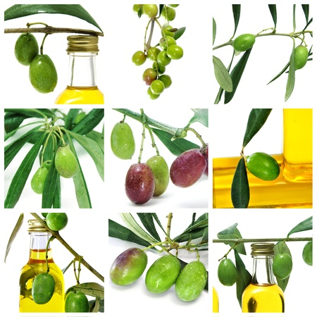 a collage of nine pictures of many olives and olive oil bottles photo