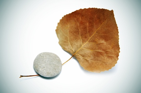 karesansui: dried leaf and stone on a white vignetted background
