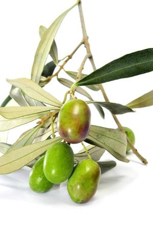 tapas espa�olas: una rama de olivo aislada en un fondo blanco Foto de archivo