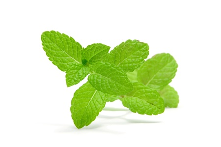mint leaves: a mint branch isolated on a white background
