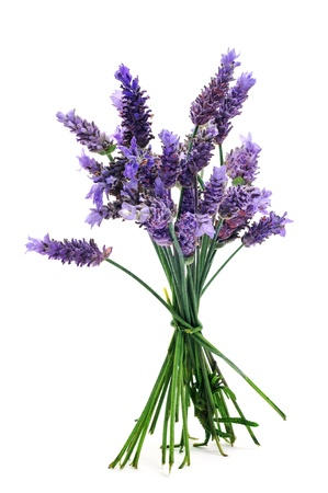 lavender: a bunch of lavender flowers on a white background Stock Photo