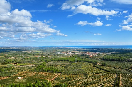 aerial view of olive groves in Costa Daurada, Spain photo