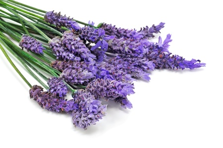 homeopatia: algunas flores de lavanda sobre un fondo blanco Foto de archivo