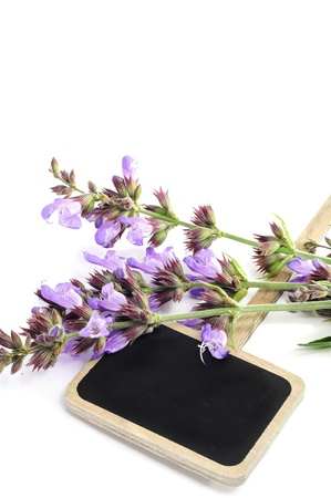 broaching: salvia flowers and a blank chalkboard gardening label on a white background