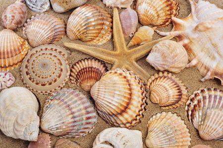 caracolas de mar: conchas marinas y seastar en la arena de una playa Foto de archivo